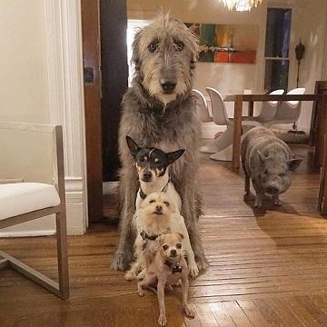 動物大家族