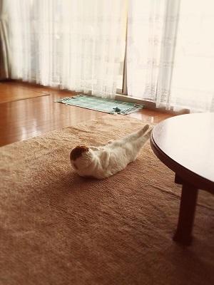 kanineko
