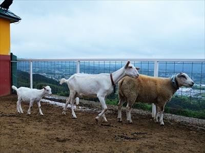 ワールド牧場・ヤギとヒツジの子供
