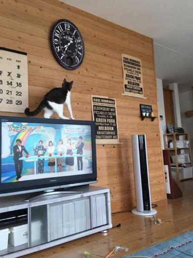 時計 時間 いたずら 猫
