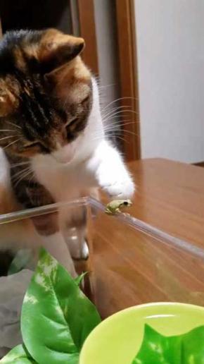 カエル 猫 優しい