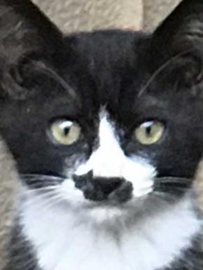 猫 鼻 模様