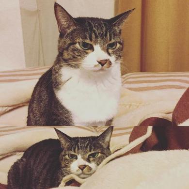猫 留守番 表情 怒り ジト目