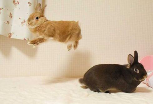 ウサギ 舞う ベッド 2羽