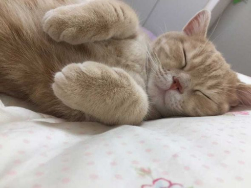 ミルくん 猫 布団 就寝