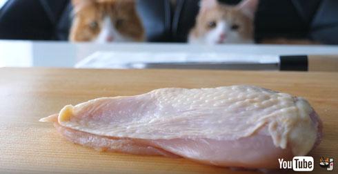 鶏肉を眺める猫たち