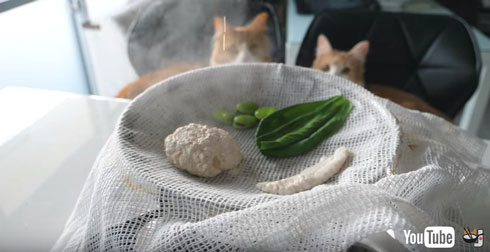 材料を蒸すところ眺める猫たち