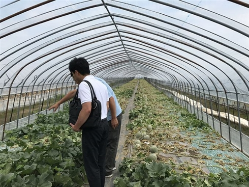 メロン農家、畑に除草剤まかれる被害「悪魔レベルの所業」 農園代表は自衛を呼びかけ