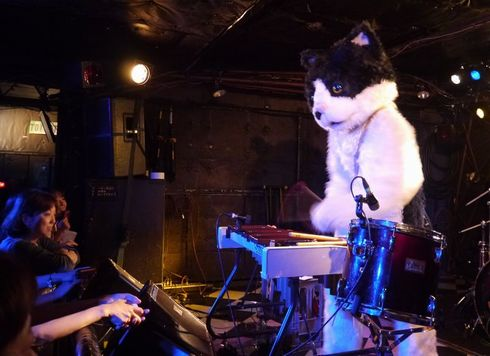 むぎ(猫) ライブ 猫 音楽 インタビュー