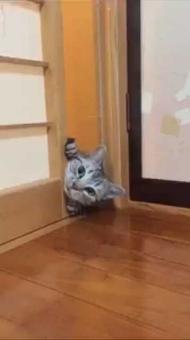 すき間 猫 顔