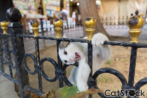 CatStock