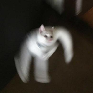 猫 躍動感 元気 動き