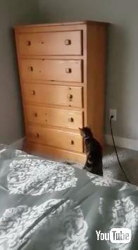 猫 タンス