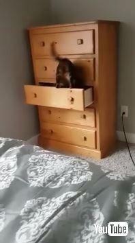 猫 タンスに入る