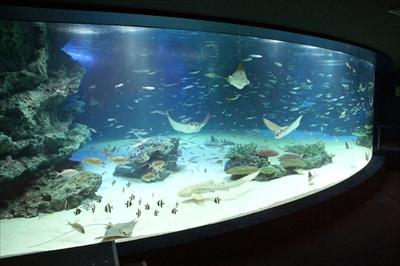 サンシャイン水族館 アリクイ・タエのお散歩