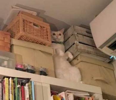 猫 ハマる ポーズ 謎 本棚