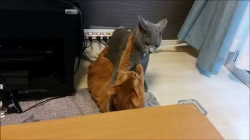 ドラクエ 戦闘曲 猫 ケンカ
