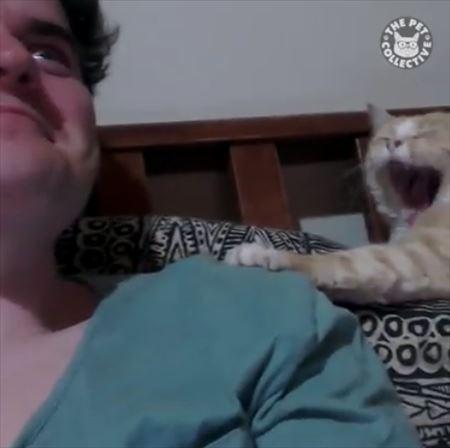 猫 あくび