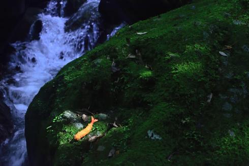 大自然でエビフライ写真