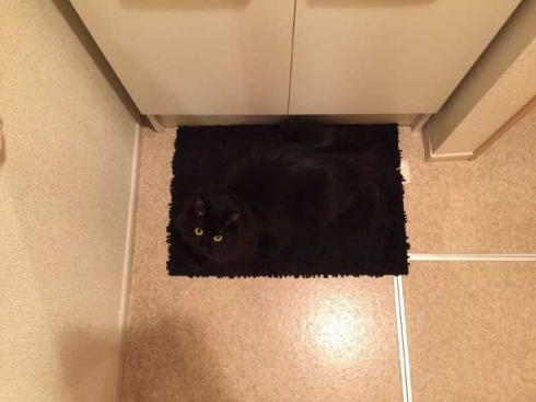 黒猫 擬態 マット