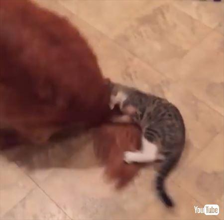猫 犬 尻尾