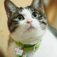 迷子札つき猫1