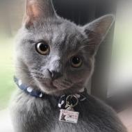 迷子札つき猫2