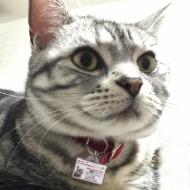 迷子札つき猫6
