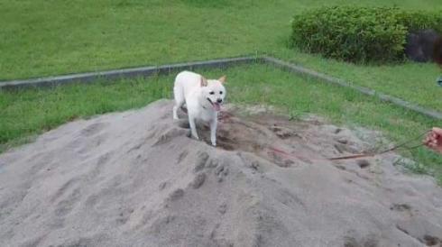 砂場 発狂 我に返る 柴犬