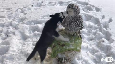 犬 フクロウ