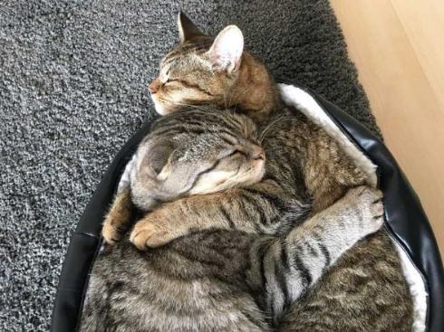 猫 ラッコ 貝 寝顔