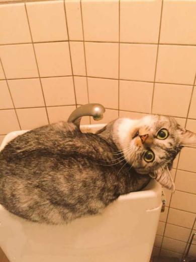 猫 風呂場 異常