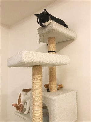 うちの猫がまた変なことしてる。