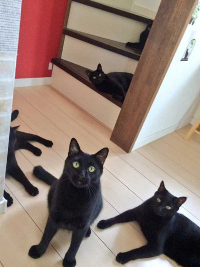黒猫 ミーティング 玄関