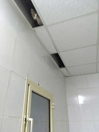 猫 忍び 部屋 天井