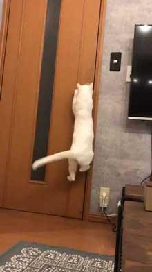猫 ドアノブ 縦 ご乱心