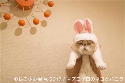 ねこ休み展 秋