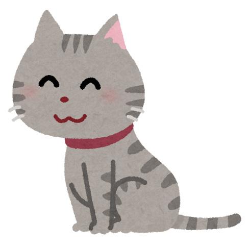 猫にとってアロマオイルは危険って本当?