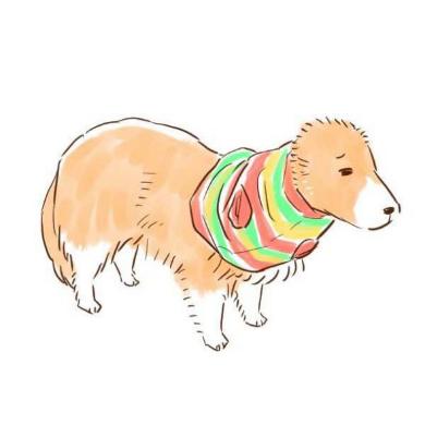 ネットショッピング 失敗 犬 服 シェルティ