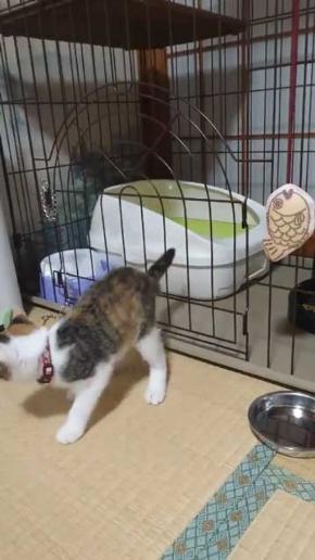 子猫 ケージ 脱走