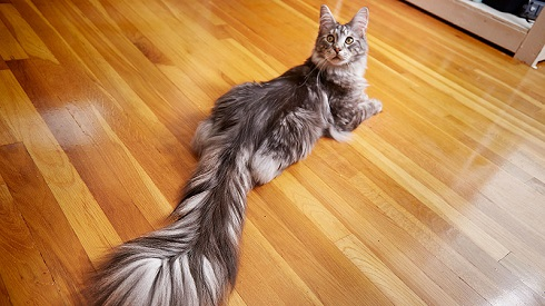 ギネス猫ちゃん