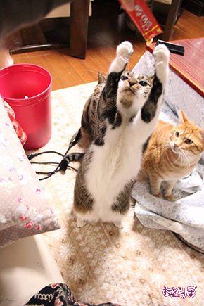 ちゅ〜る CIAO ちゅ〜る いなば食品 猫 ねこ ネコ