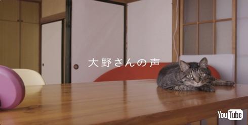猫は三年の恩を三日で忘れる