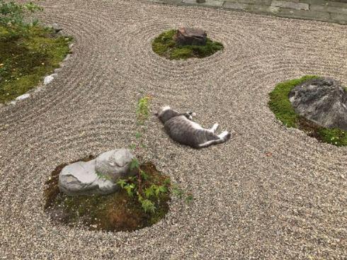 猫 枯山水 王子 荘内神社