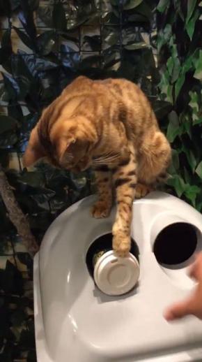 猫 ごみ 捨てる 京都 ヒョウ猫カフェ