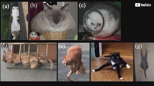イグ・ノーベル物理学賞「猫は固体と液体になれるか?」の研究が受賞 液体が容器に合わせ形を変える性質に着目