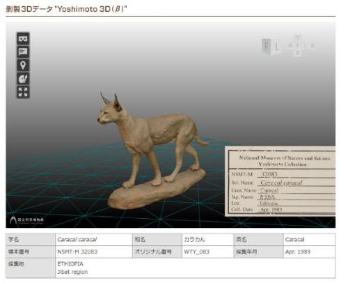 ヨシモトコレクション 剥製 3Dモデル 国立科学博物館
