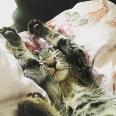 猫 画像 ツイッタ−にアップするだけの30歳 女子