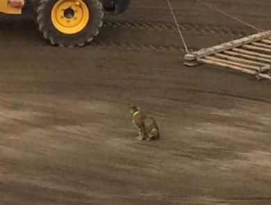 猫 動かない トラクター 整地