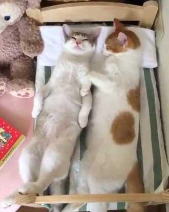 ベッド 猫